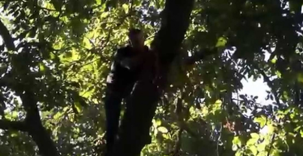 Ceviz ağacından düştüler