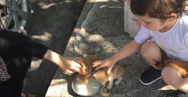 Biberonundaki sütle kedi yavrularını kurtardı