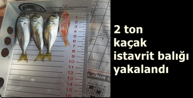 2 ton kaçak istavrit balığı yakalandı