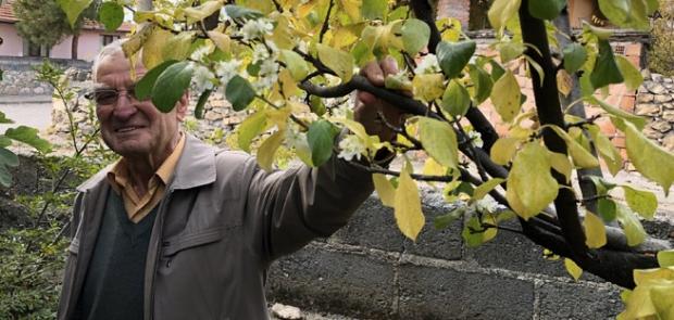 Erik ağacı kışın ortasında çiçek açtı