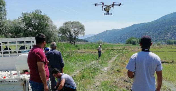 Kargılı çiftçiler çeltik tarlalarını drone'larla ilaçlıyor