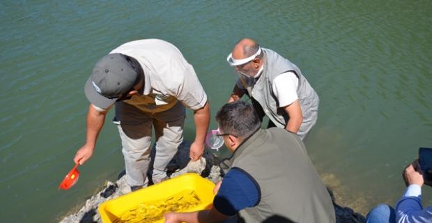 Aksu Göleti'ne 16 bin alabalık yavrusu bırakıldı