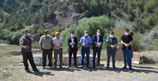 Kene avcısı 'sülünler' 14 köyde doğaya salındı