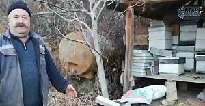 Ayılar, arı kovanlarına dadandı