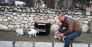 Lastikten kedi evi yaptı