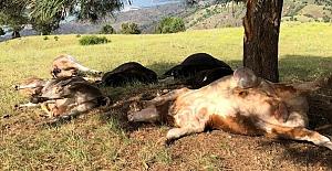 bYıldırım düştü, 8 hayvan telef.../b