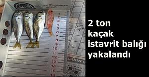 b2 ton kaçak istavrit balığı yakalandı/b