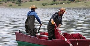 'Canavar' adı verilen gümüş balığı avcılığı başladı