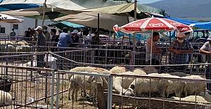 Kurban pazarına koronavirüs etkisi