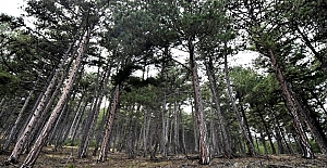 'Sağlık için ormanların çoğaltılması gerekiyor'