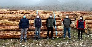 Kargı'da orman emvali satışta rekor kırıldı