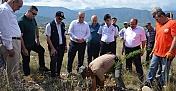 15 Temmuz Şehitleri Hatıra Ormanı'na 250 fidan